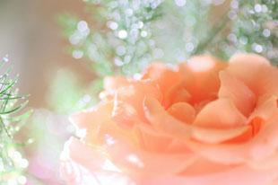 伝えたい思いをお花に込めて…のイメージ